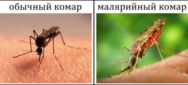 Почему ежегодно более 4 миллионов человек погибает от малярии?