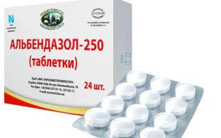 Какие препараты убивают мгновенно ленточных паразитов