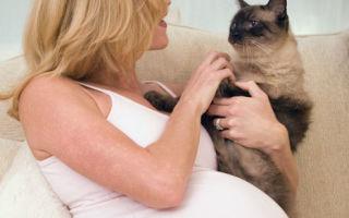 Как протекает токсоплазмоз у взрослых