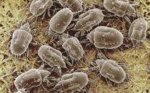 Когда причиной аллергии являются паразиты