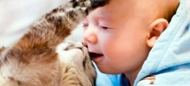 Особенности токсоплазмоза у детей
