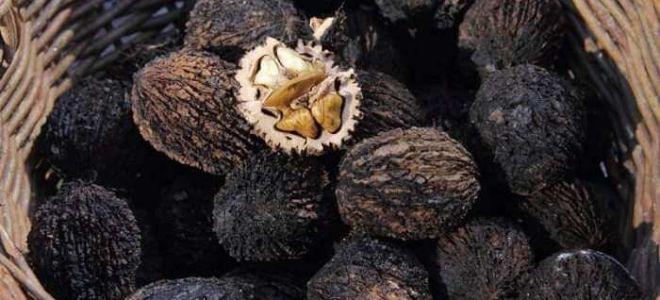 Черные орехи в борьбе с гельминтозами
