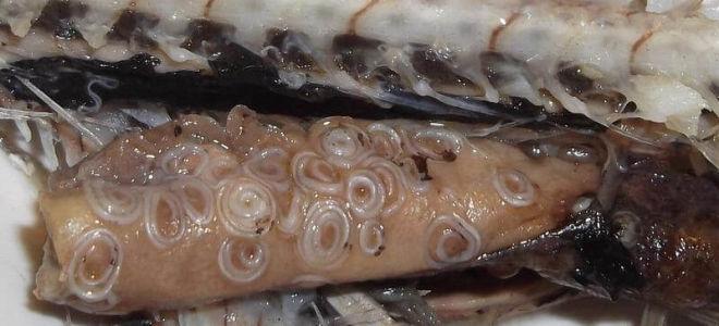 Если в рыбе глисты, можно ли ее есть: что делать, в чем опасность?