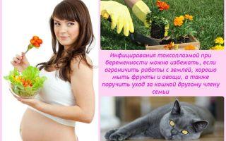Чем опасен токсоплазмоз у беременных