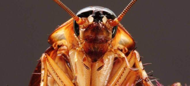 Виды домашних паразитов