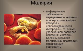 Что надо знать о малярии: виды и симптомы болезни