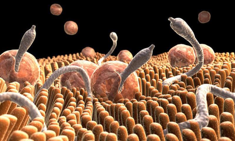 Домашнее средство от паразитов в организме человека