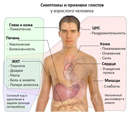 Симптомы и признаки глистов