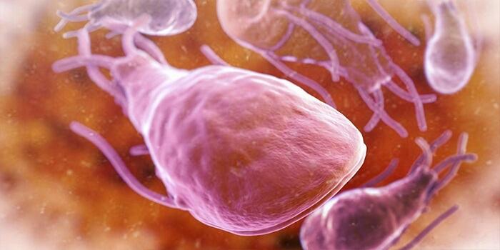 Могут ли паразиты вызывать аллергию