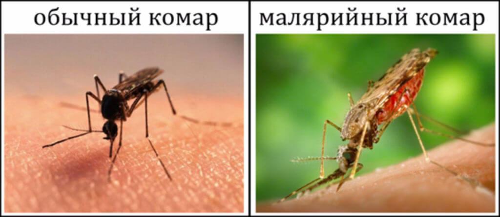 Сравнение комаров
