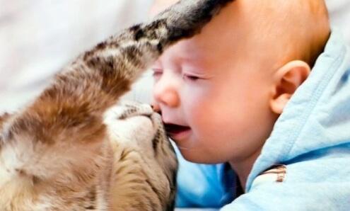 Ребенок и кошка